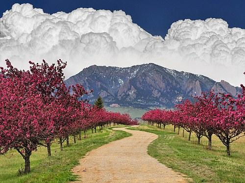 Spring time in Colorado