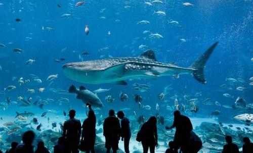 The aquarium in Atlanta